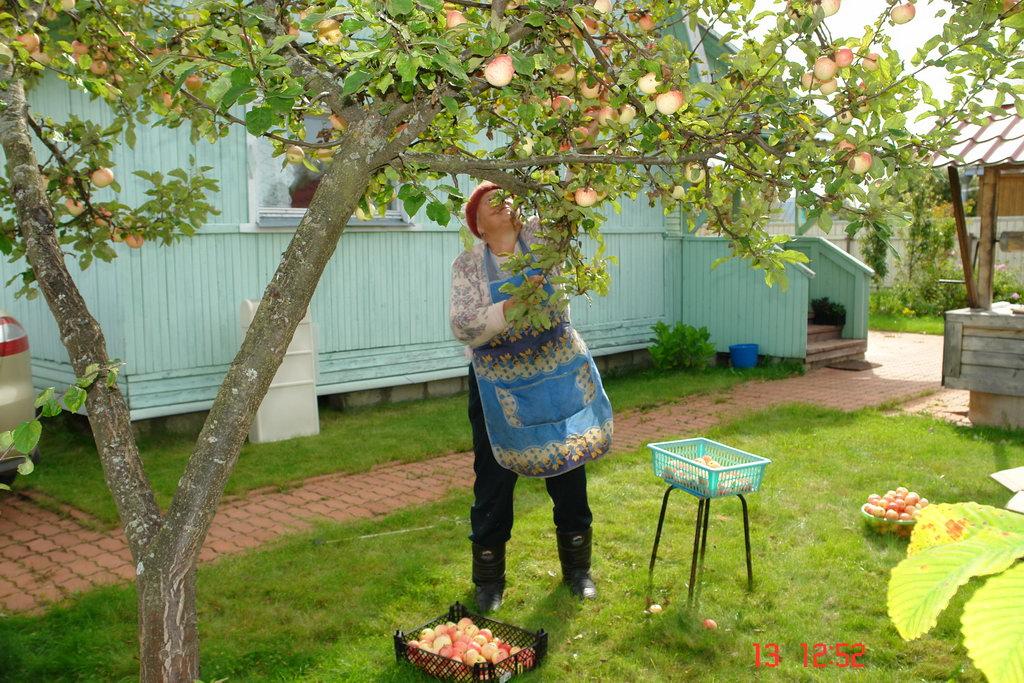 Сезонные работы сад огород